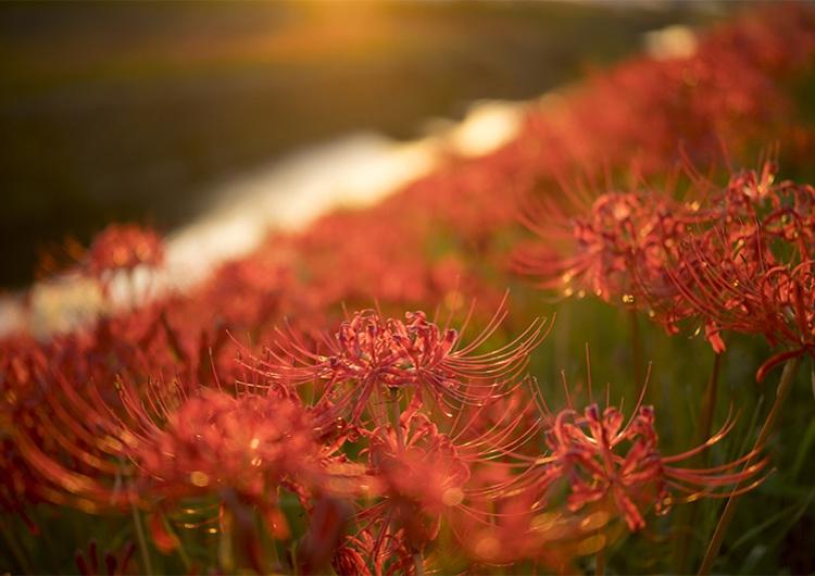 9/23は陰陽のバランスが最高の開運日♡秋分の日の浄化パワーで運気を上げる方法